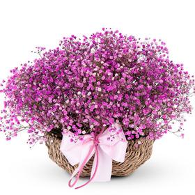 핑크안개바구니